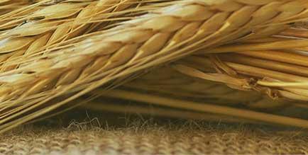 Продвижение агрохолдингов