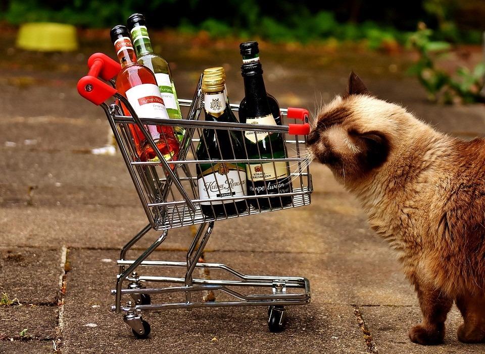 Будет установлено время для онлайн-покупки алкоголя